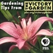 The Victory Garden Podcast