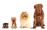 Different Types of Dogs Overview